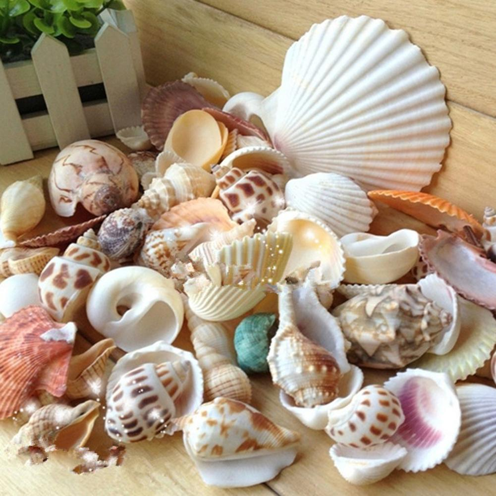 100g Mixed Shape Seashell Conch Aquarium Mini Landscape Ornament DIY Craft Decoration