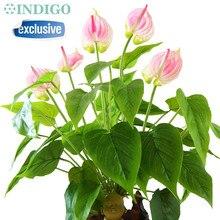 INDIGO- Wedding Flower +Roots)