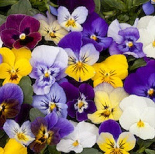 popular shade loving flowersbuy cheap shade loving flowers lots, Beautiful flower