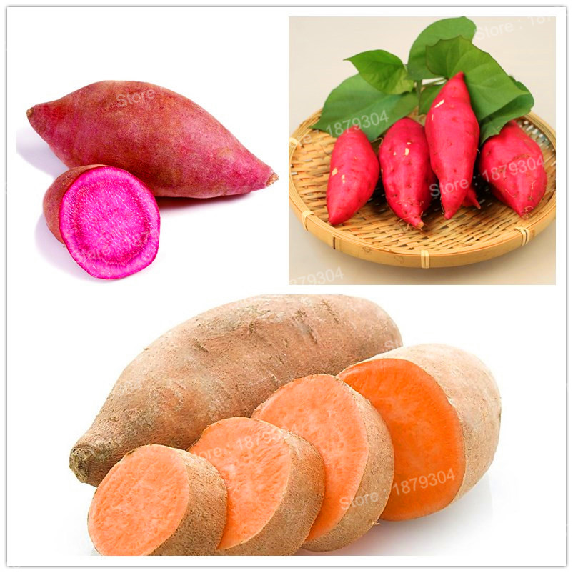 100pcs/bag sweet potato seeds Vegetables Seeds fresh food Fruit And Vegetable Garden Supplies bonsai plant for home garden ...