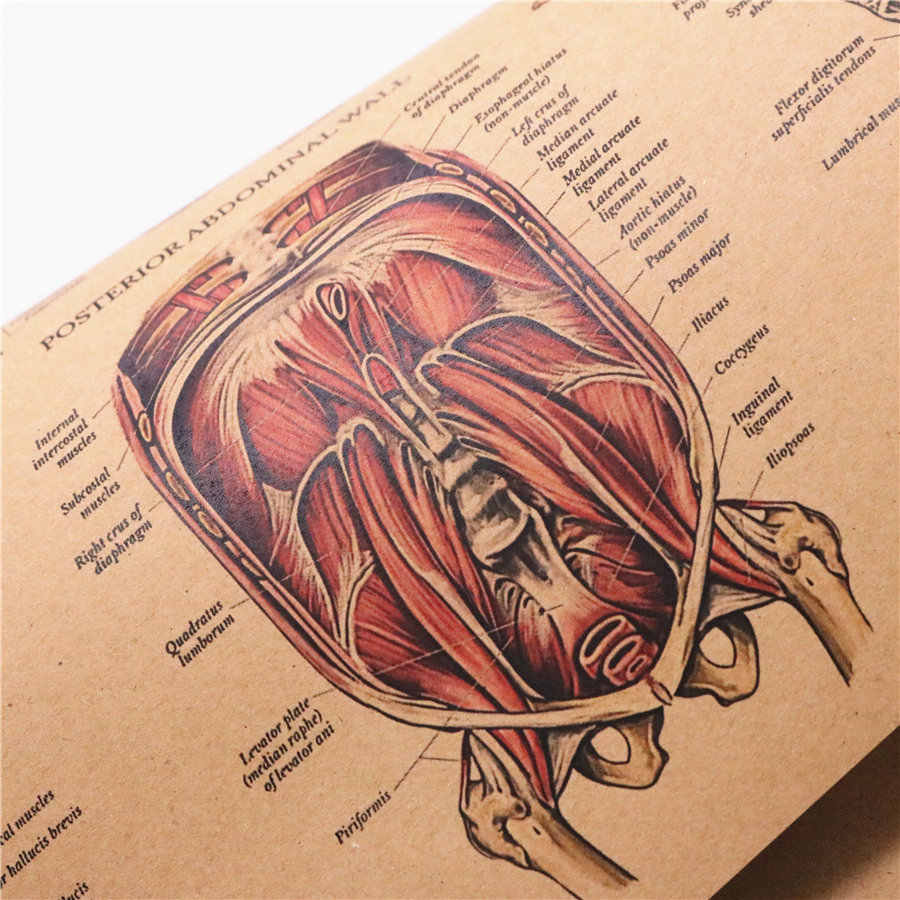 the human body muscular system Structure HD Vintage Paper Poster Bar Home Decor Retro Kraft Paper Painting 42x30cm
