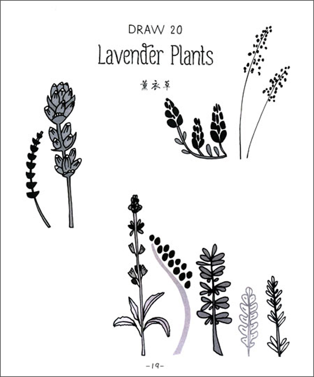 Sketsa Bunga Sketsa Gambar Bunga Lavender