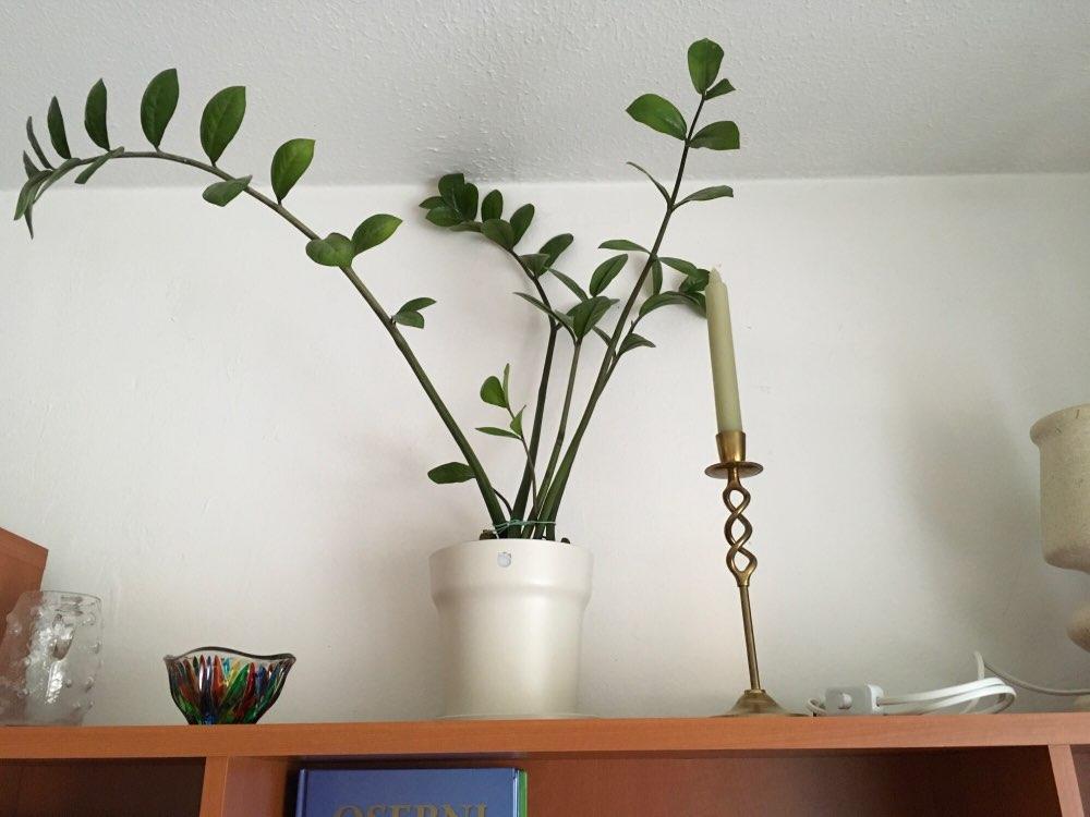 [Global Version]Xiaomi Mi Flora Smart Flower Pot Plants Grass Monitor