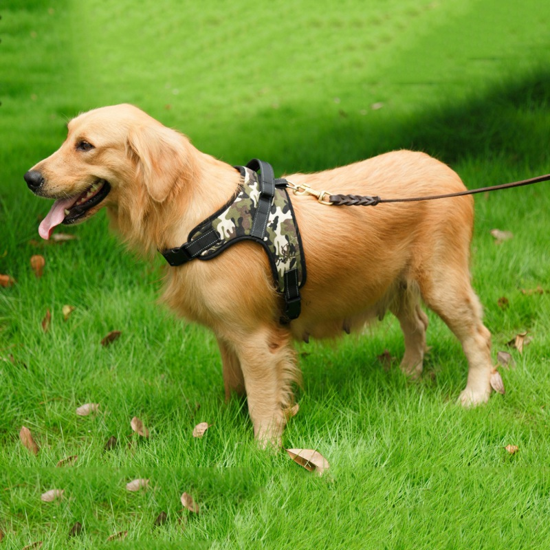 Breathable Pet Dog Matched Leashes and Adjustable for Dogs Puppy Cat Pets Chest Strap Leash 4 Corols