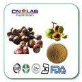 Semen de alta calidad Aesculi P.E/Caballo pecho Tuerca P.E (Escina 20% por HPLC) 500g envío gratis extracto de castaño de indias