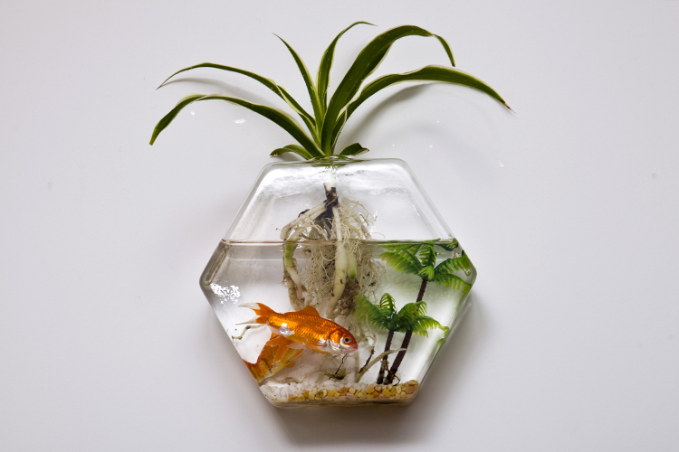 Floating Wall Terrarium Cool Hexagon Diy Wall Glass Vase Recyclable