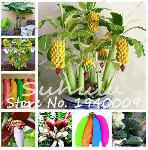 120pcs/bag Colorful Mushroom Bonsai Indoor Funny Succlent