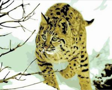 "DIY Painting By Number – Wild Cat (16""x20"" / 40x50cm)"