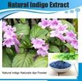 Natural Indigo Naturalis Polvo de tinte/Indigo Naturalis polvo de hoja