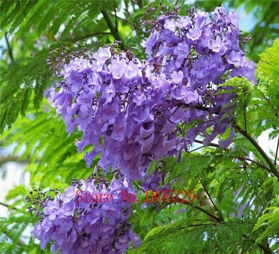 Achetez en gros violet arbuste fleurs en ligne des for Arbuste en ligne