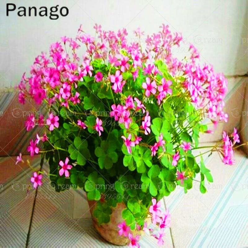 100 Pcs / Bag Clover Seeds Bonsai Flower Seeds Home Garden Four Leaf Lover Grass Seeds Office Desk Beautifying Blooming plants