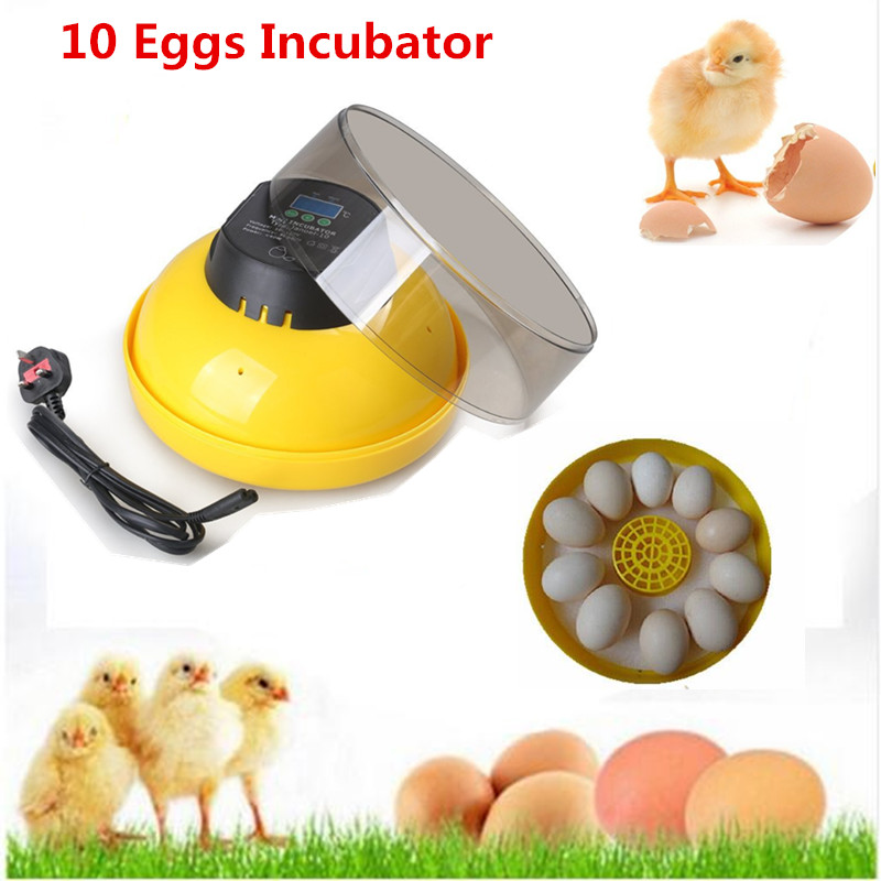 Hot Sale mini 10 eggs family use hatcher with digital display poultry brooder quail incubator factory price factory price hot sale lutein with cheapest