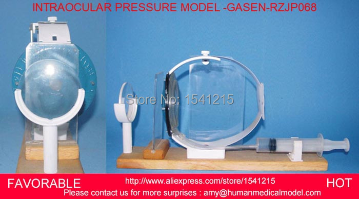 INTRAOCULAR PRESSURE MODEL INTRAOCULAR PRESSURE AND VISION INTERACTION DEMO EYE ANATOMY MODEL EYE VISUAL AIDS GASEN