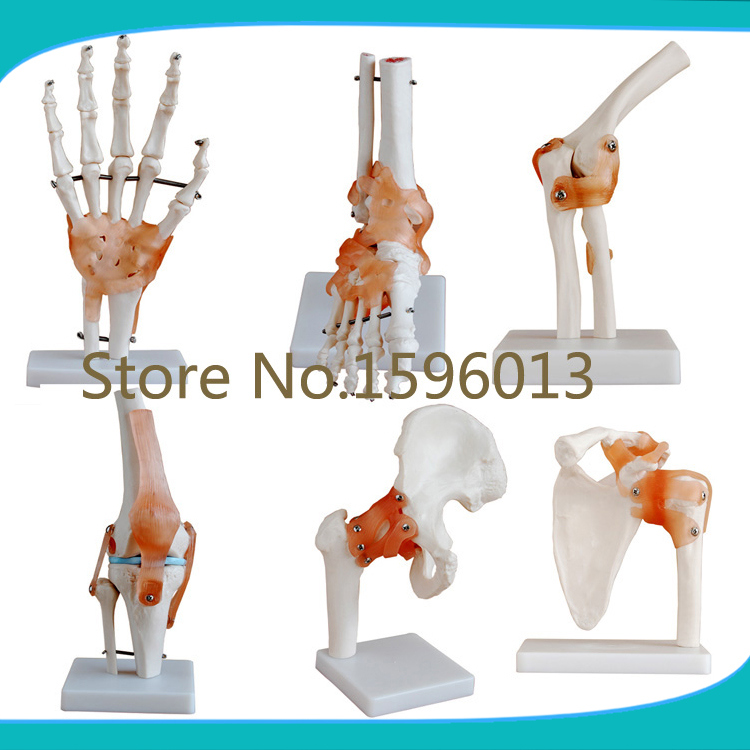 online buy wholesale human skeleton hip from china human skeleton, Skeleton