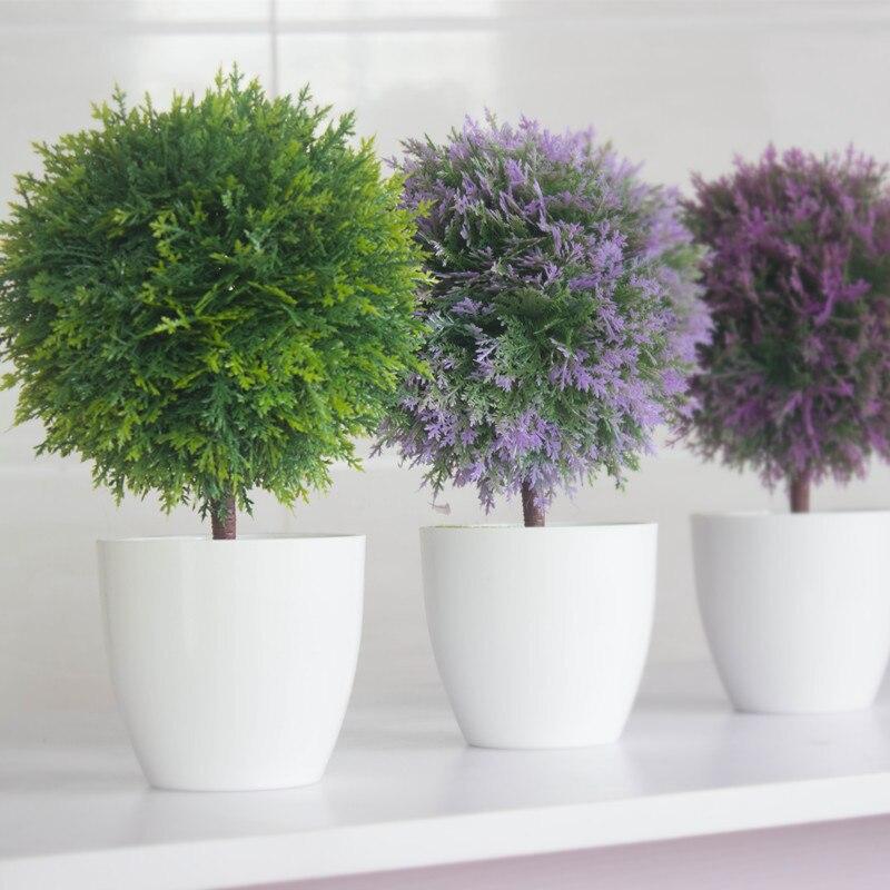 Plantas De Interior Con Flores Es Justamente Por Esto Que Hoy Les - Plantas-interior-con-flor