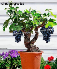 50 Pcs/pack Grapes plant Bonsai Fruit Black Dwarf Tree plants Home Garden
