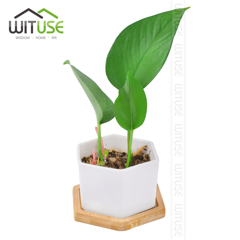Image 2 - WITUSE Ceramic Flowerpot Bamboo Stand Indoor Fern Succulent Plant Holders Saucers Desktop Bonsai Pot Bamboo Flower Planters Tray-in Flower Pots & Planters from Home & Garden