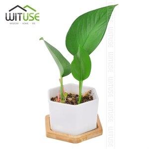 Image 2 - WITUSE maceta de cerámica con soporte de bambú para plantas suculentas, soporte para plantas de interior, platillos, bonsái, maceta de escritorio, bandeja para plantas de Bambú
