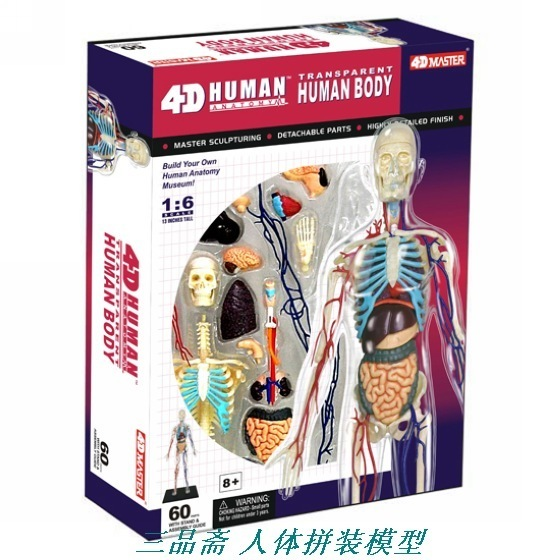 1 : 6 transparent systemic skeletal mdoel Human assembled vascular medical education model 3 1 human anatomical kidney structure dissection organ medical teach model school hospital hi q