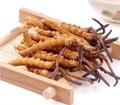 100% Natural extrato de Cordyceps sinensis em pó/lagarta fungo Frete grátis