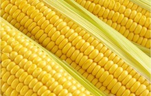 (Mix minimum order $5)1 original pack 10 pcs Yellow Waxy Corn Vegetable Seeds Free Shipping B023