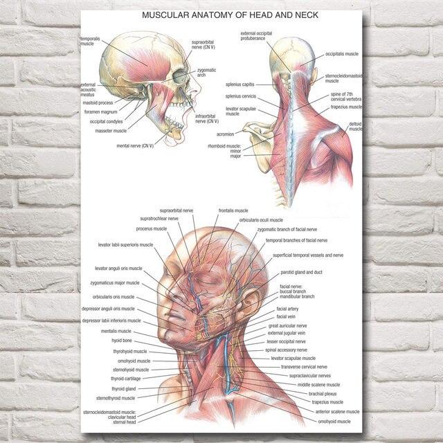 Anatomy Veins Arteries Skeleton Muscles Head Neck Art Silk Poster ...