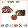 100g Extrato de casca de Pinho de qualidade superior com preço favorável e shippment livre