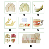 Dental Implant Model for implant placement practice Anatomically Bone mandible teeth model