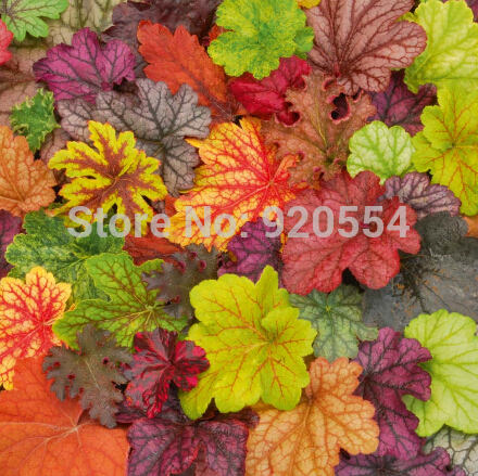 popular plants coral bellsbuy cheap plants coral bells lots from, Natural flower