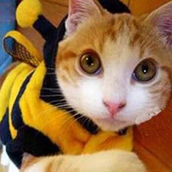 Vêtements à capuche pour animaux domestiques   Costume de chiot fantaisie mignon, manteau de chat, tenue Style abeille professionnelle pour animaux de compagnie