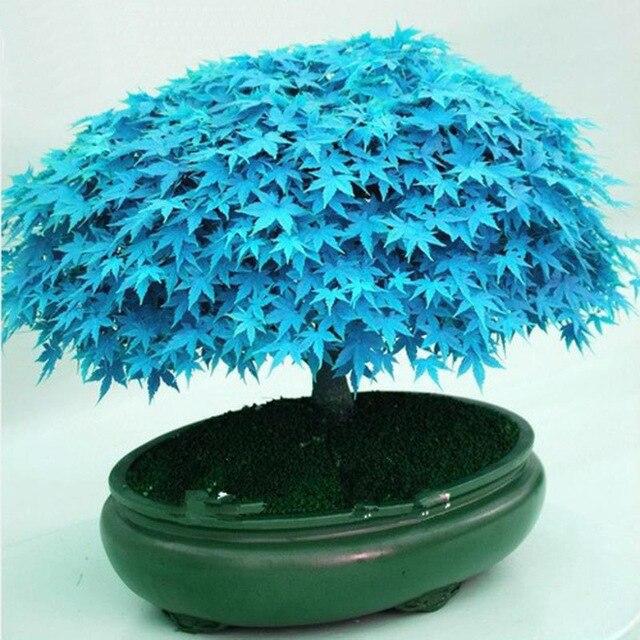 bonsai flowers seedsplants plants 20pcs of plants indoor flowering trees ukraine indoor succulent bonsai tree phalaenopsis plant