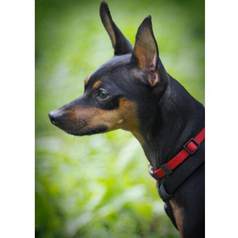 Diamond Painting miniature pinscher dog Full Square 5D diamond animal Cross Diamond Mosaic DIY Embroidery Dog Painting Gift