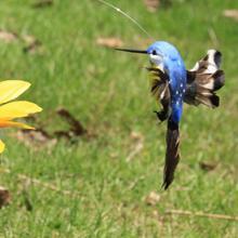 Solar Kolibri Power Vibration Tanzen Fliegen Flattern Vögel Für Garten Hof Dekorative Beteiligung Fliegen Flattern Dekoration spielzeug