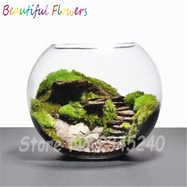 200pcs sphagnum moss bonsai moss seeds lovely moss ball decorative grass seeds potted