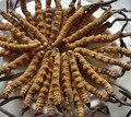 Venda quente 200g Cordyceps sinensis extrato em pó GMP fonte Da Fábrica 100% Natural/lagarta fungo Frete grátis
