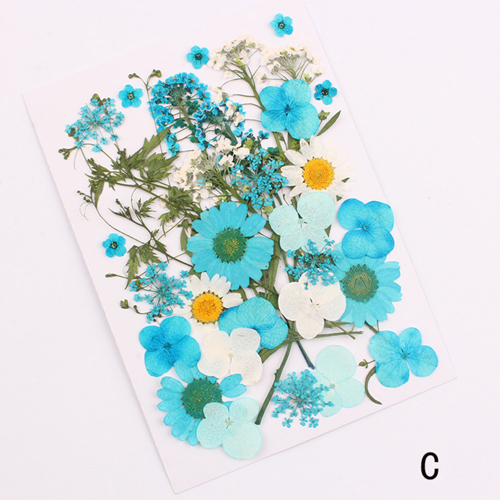 B Wandofo Pressed Flower Mixed Organic Natural Dried Flowers DIY Art Floral Decors Collection Gift