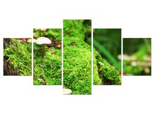 5 Pieces mushroom grass leaf Natural landscape Poster Fabric Poster Print Great Pictures On The Wall For Home Decor Framed(China)