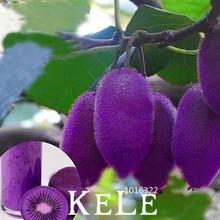 New Fresh Seeds 100PCS/Pack New varieties Purple Heart Kiwi Seeds Kiwi Fruit Tree Bonsai Seeds for Home & Garden,#THMU3M