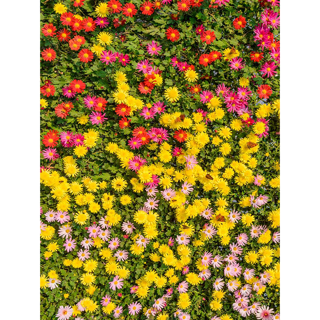 Allenjoy photography backdrop Leaves color flower wall yellow red ...