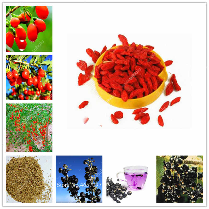 2000 個 100% 本物の黒と赤室伏ベリー中国のクコ盆栽ハーブ盆栽鉢植え植物家庭菜園屋外の家植物