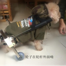 Customized dog use scooter, hind leg disabled pet wheelchair
