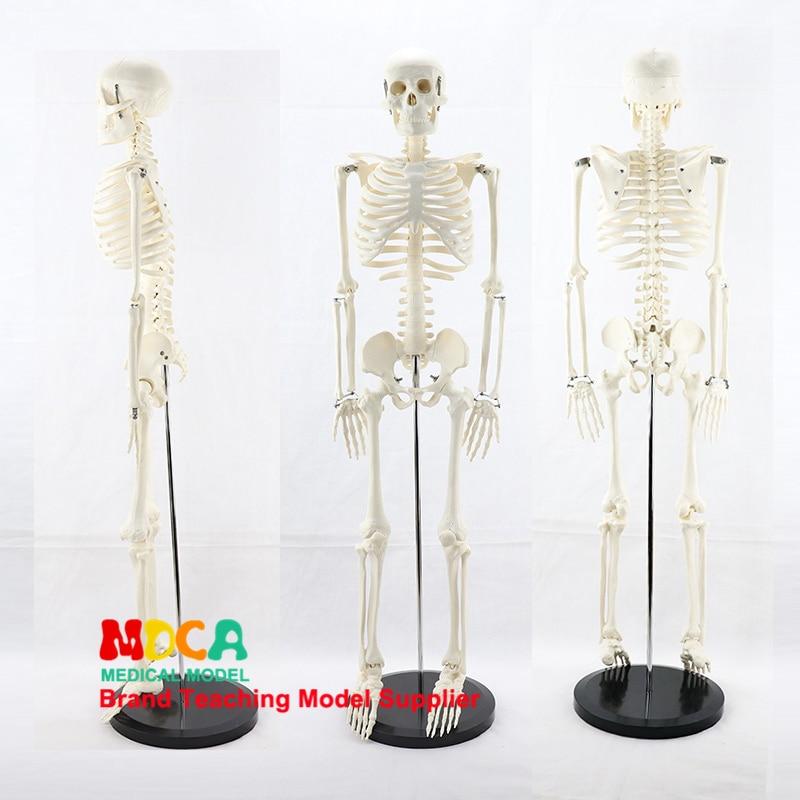 Medical Standard For Fine Arts And Medicine 85CM Skeleton Model Of Human.skeleton Model MGG201