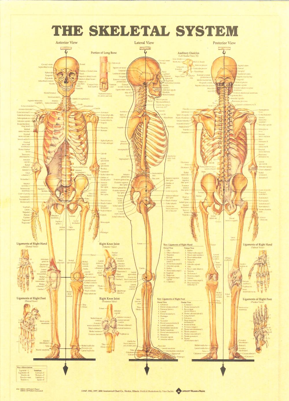 Aliexpress Buy Vintage Medicine Human Anatomy Posters Kraft
