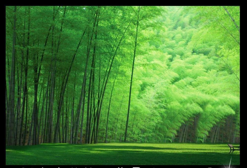 High Quality 3d Murals Wallpaper Bamboo Grove Custom Stickers Walls