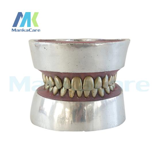 Manka modelo de extração de dentes Oral Care-Metal Modelo Modelo Dente Dentes
