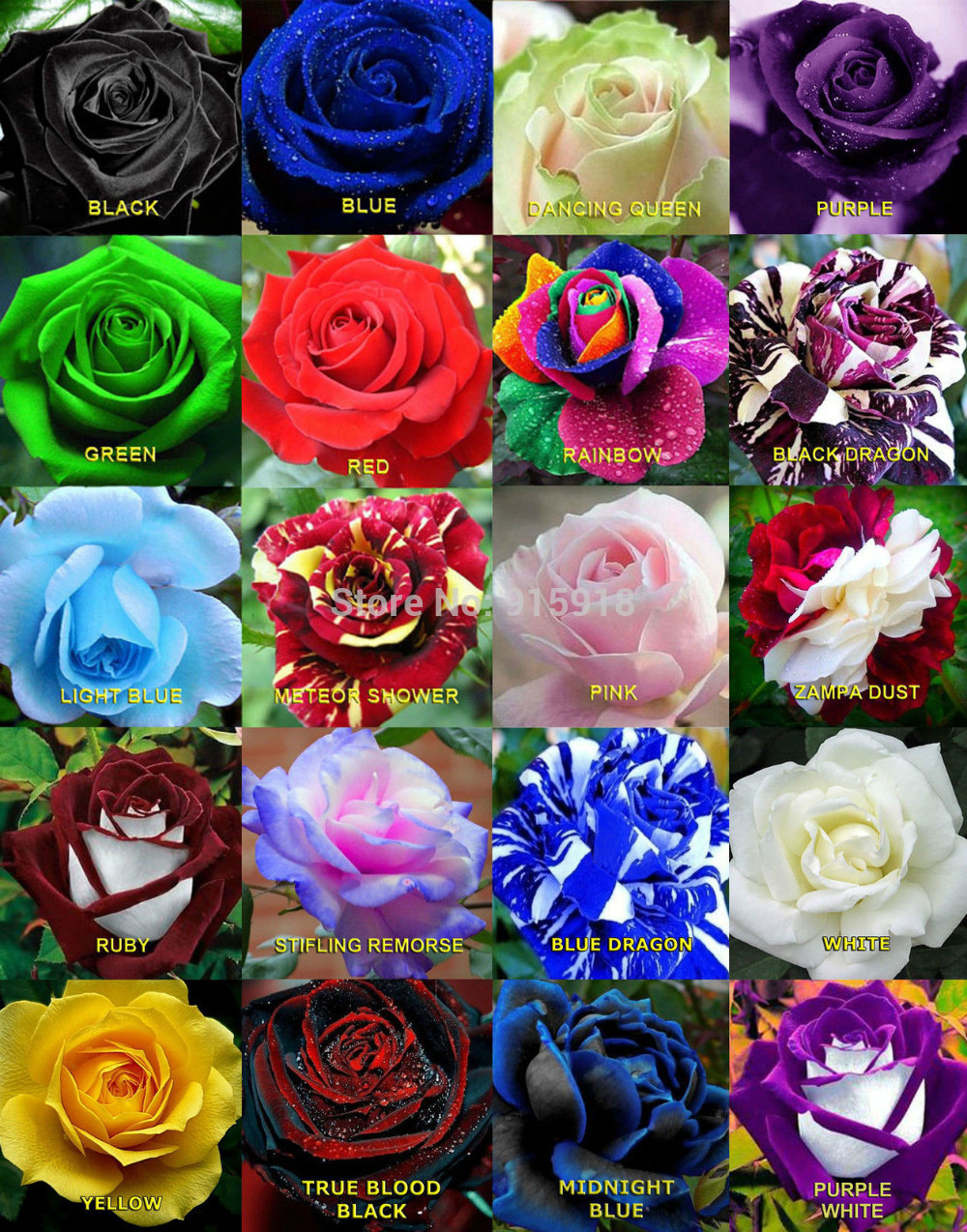 Online buy wholesale rainbow rose from china rainbow rose for Do black roses grow naturally