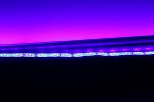 Image 5 - DIY Led U HOME DC12V 440nm 450nm Bể Cá Cá Actini Xanh Dương & Tím Chống Nước SMD2835 Dây Đèn LED Ánh Sáng Cho Decoratioin