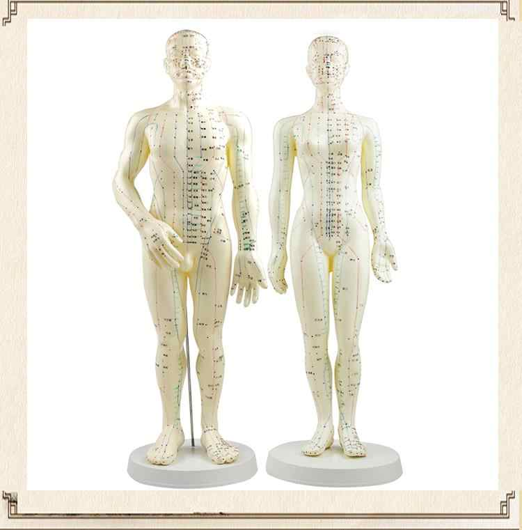 50CM English human men / women acupuncture meridian points model male or female acupoint model with user manual