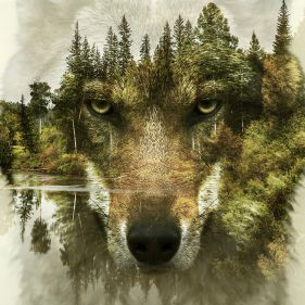 1 panel forest wolf close-up classic canvas printing wall painting art template decorative framed XJZFX-21