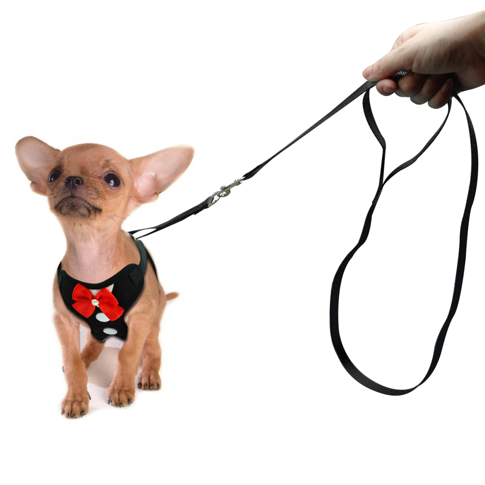 harnais pour petit chien avec cravate